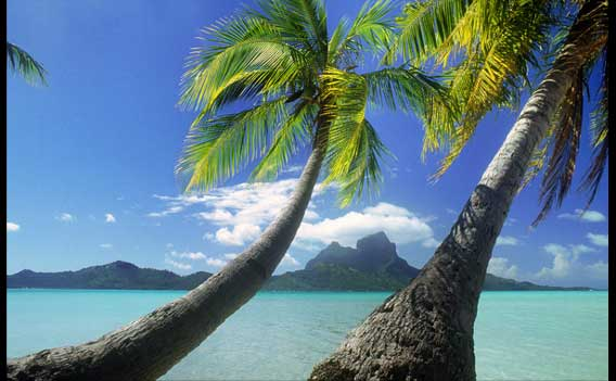 tropical destinations and Home Based Business Opportunity